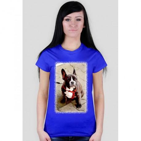 Psiak - cartoon - charytatywna bluzka damska z nadrukiem